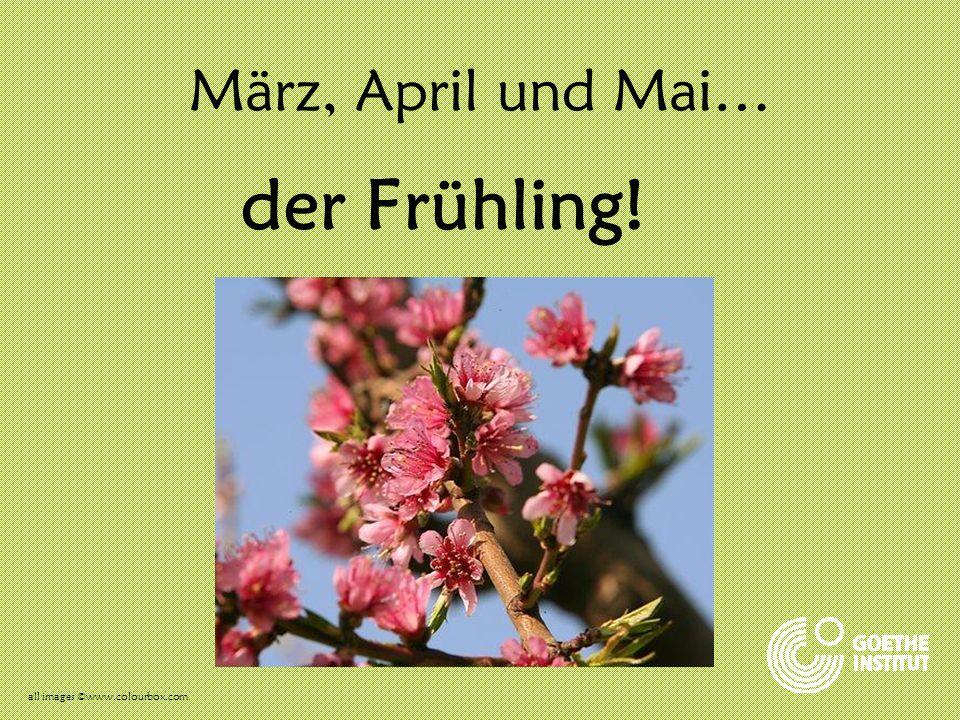 Der Frühling Es gibt viele Blumen. all images ©www.colourbox.com
