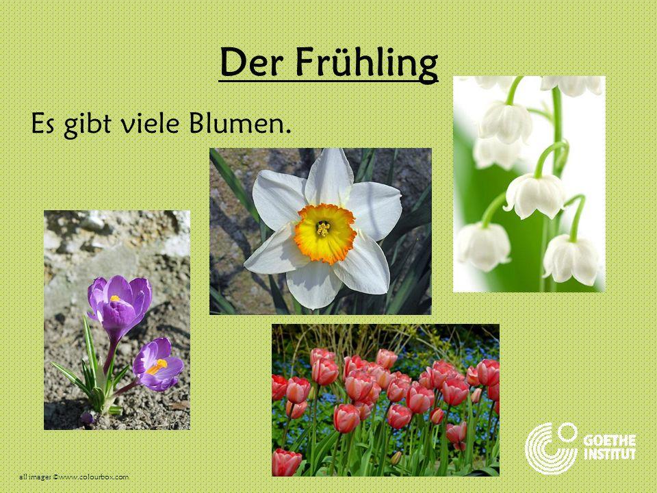 Der Frühling Im Frühling feiern wir Ostern.