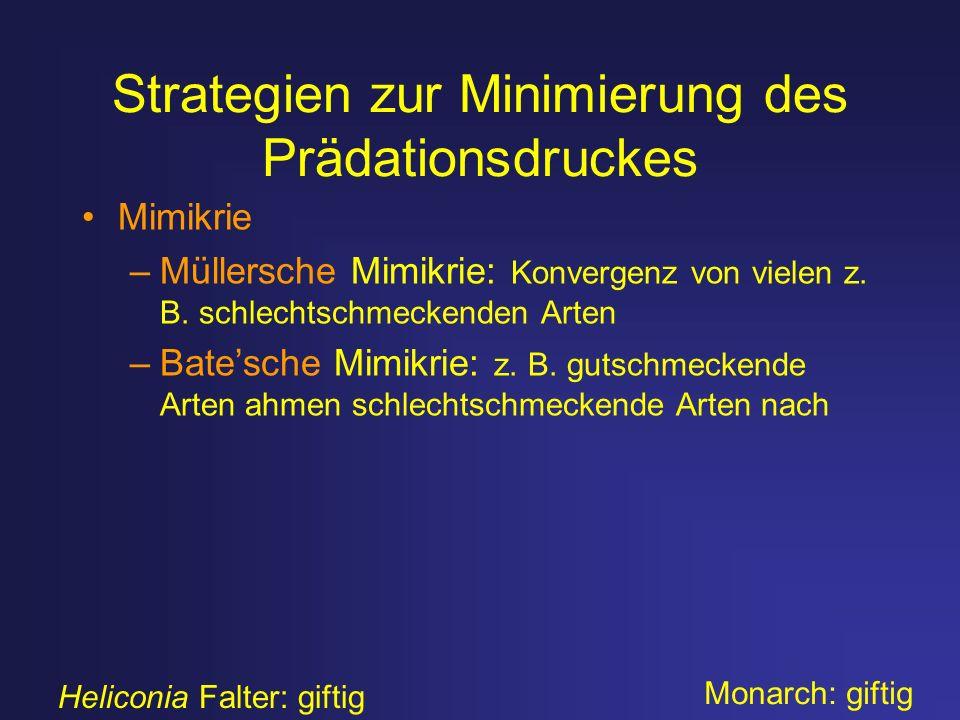 Strategien zur Minimierung des Prädationsdruckes Mimikrie –Müllersche Mimikrie: Konvergenz von vielen z. B. schlechtschmeckenden Arten –Batesche Mimik