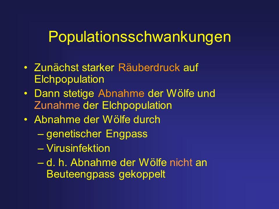 Populationsschwankungen Zunächst starker Räuberdruck auf Elchpopulation Dann stetige Abnahme der Wölfe und Zunahme der Elchpopulation Abnahme der Wölf