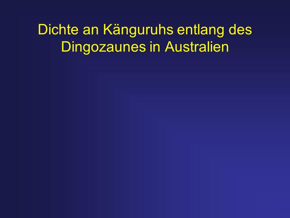 Dichte an Känguruhs entlang des Dingozaunes in Australien