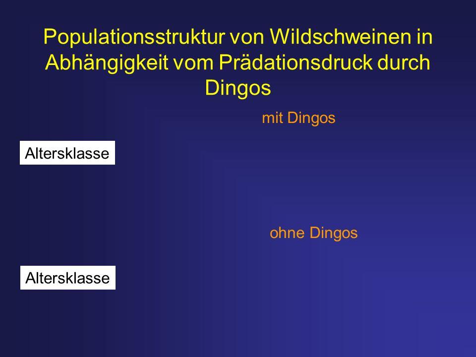 Populationsstruktur von Wildschweinen in Abhängigkeit vom Prädationsdruck durch Dingos mit Dingos ohne Dingos Altersklasse