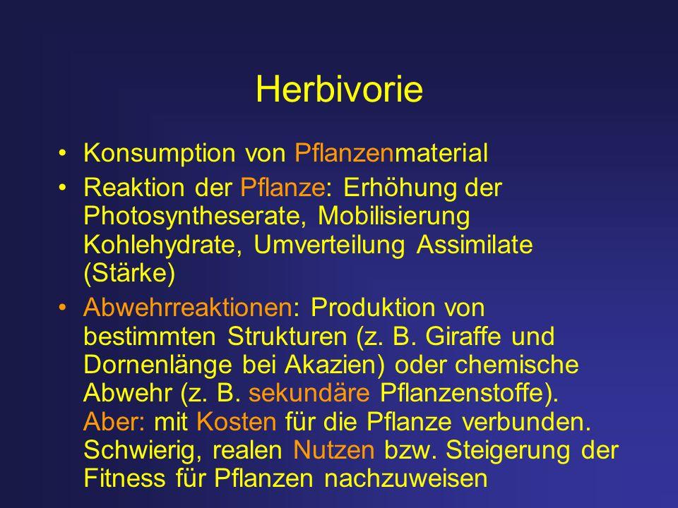 Herbivorie Konsumption von Pflanzenmaterial Reaktion der Pflanze: Erhöhung der Photosyntheserate, Mobilisierung Kohlehydrate, Umverteilung Assimilate
