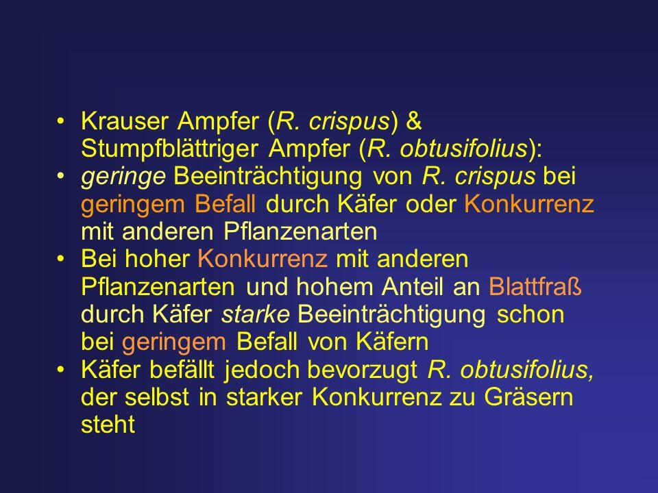 Krauser Ampfer (R. crispus) & Stumpfblättriger Ampfer (R. obtusifolius): geringe Beeinträchtigung von R. crispus bei geringem Befall durch Käfer oder