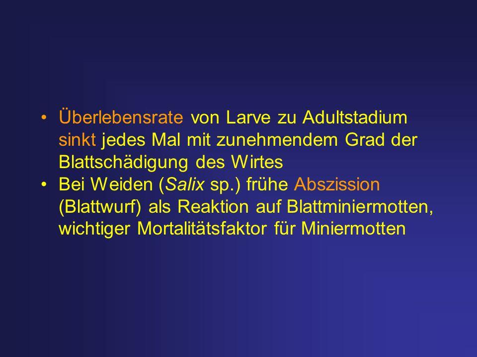 Überlebensrate von Larve zu Adultstadium sinkt jedes Mal mit zunehmendem Grad der Blattschädigung des Wirtes Bei Weiden (Salix sp.) frühe Abszission (