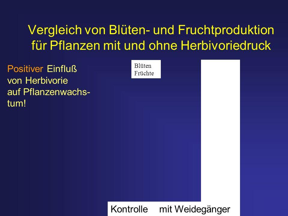 Vergleich von Blüten- und Fruchtproduktion für Pflanzen mit und ohne Herbivoriedruck Positiver Einfluß von Herbivorie auf Pflanzenwachs- tum! Kontroll