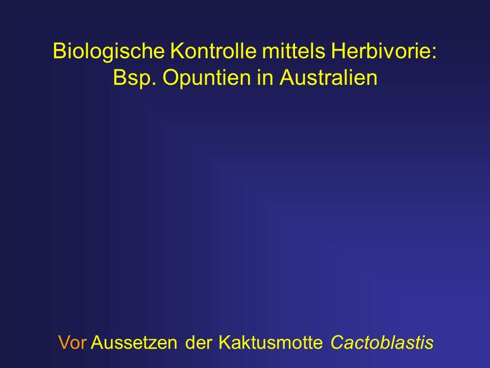 Biologische Kontrolle mittels Herbivorie: Bsp. Opuntien in Australien Vor Aussetzen der Kaktusmotte Cactoblastis