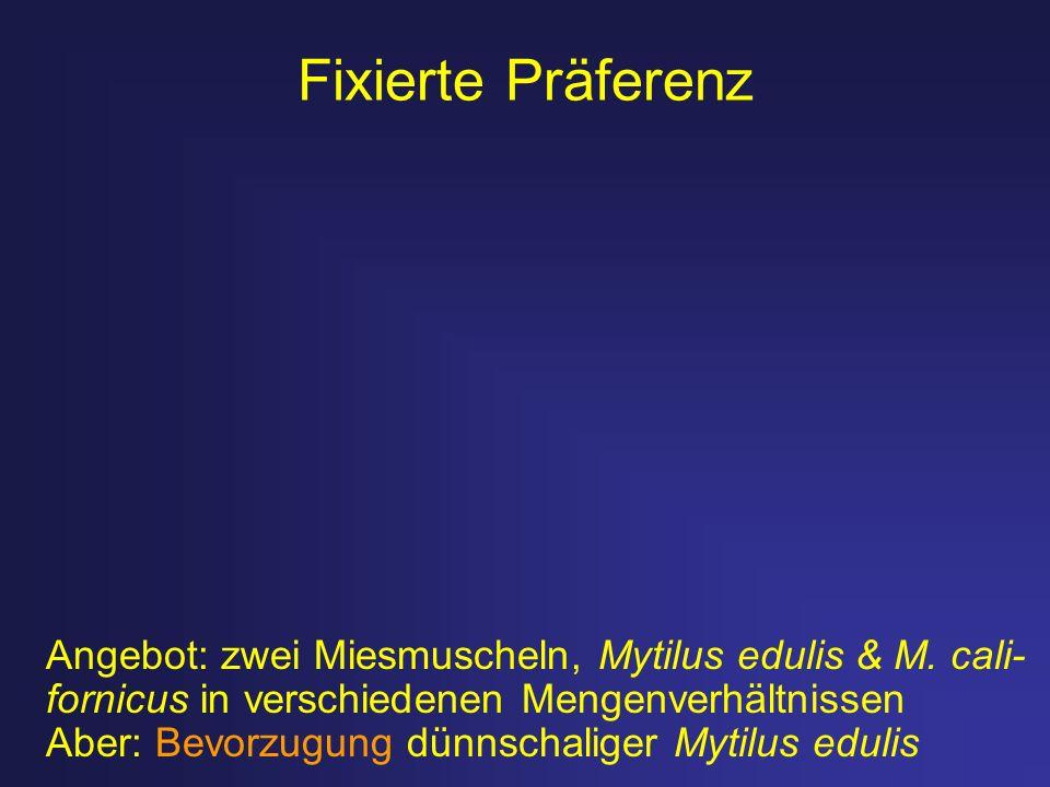 Fixierte Präferenz Angebot: zwei Miesmuscheln, Mytilus edulis & M. cali- fornicus in verschiedenen Mengenverhältnissen Aber: Bevorzugung dünnschaliger