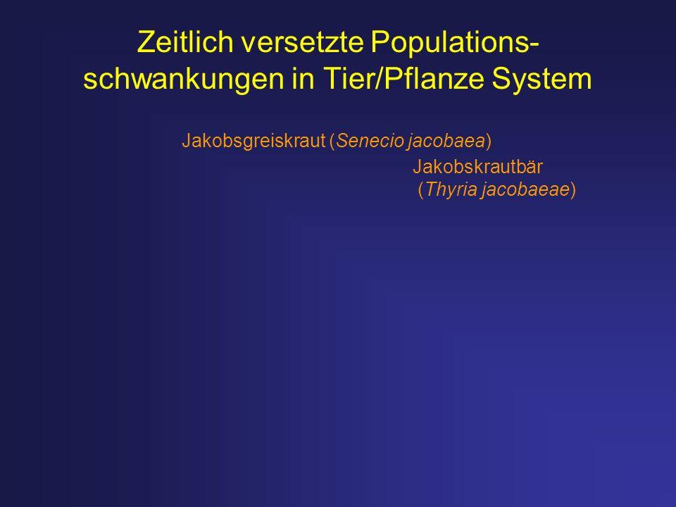 Zeitlich versetzte Populations- schwankungen in Tier/Pflanze System Jakobsgreiskraut (Senecio jacobaea) Jakobskrautbär (Thyria jacobaeae)