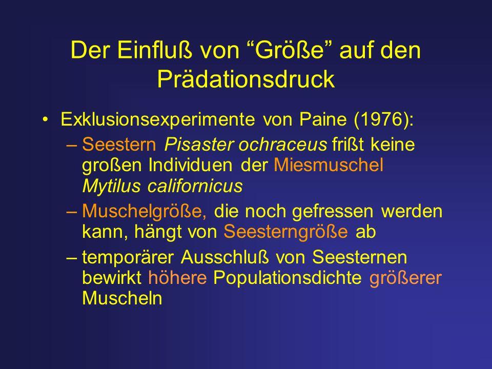 Der Einfluß von Größe auf den Prädationsdruck Exklusionsexperimente von Paine (1976): –Seestern Pisaster ochraceus frißt keine großen Individuen der M