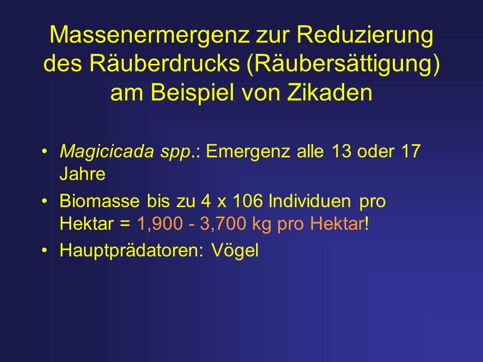 Massenermergenz zur Reduzierung des Räuberdrucks (Räubersättigung) am Beispiel von Zikaden Magicicada spp.: Emergenz alle 13 oder 17 Jahre Biomasse bi