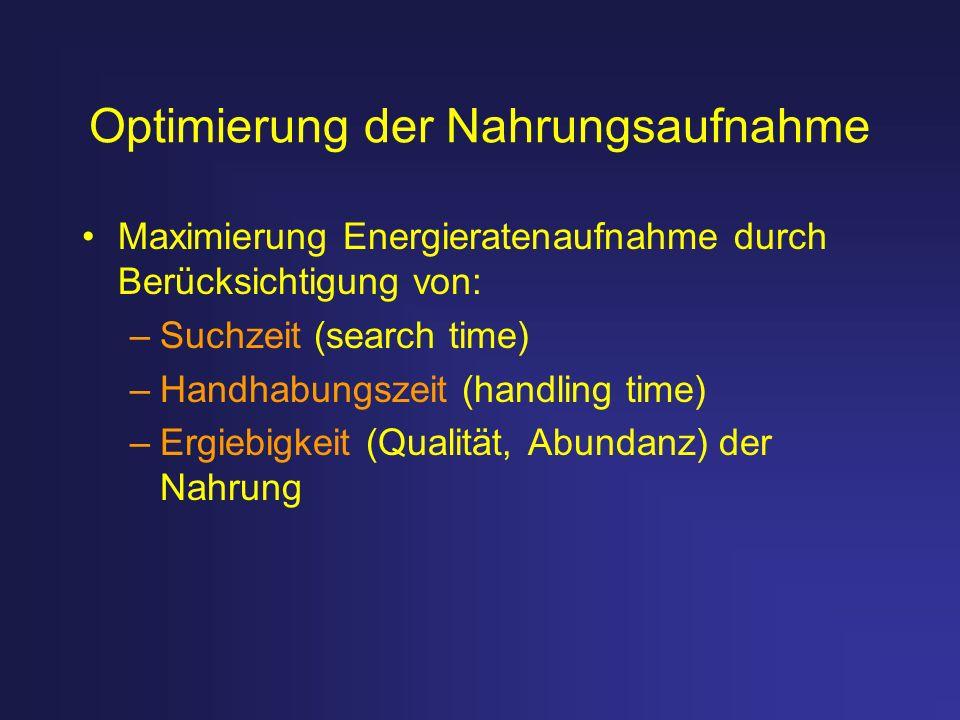Optimierung der Nahrungsaufnahme Maximierung Energieratenaufnahme durch Berücksichtigung von: –Suchzeit (search time) –Handhabungszeit (handling time)