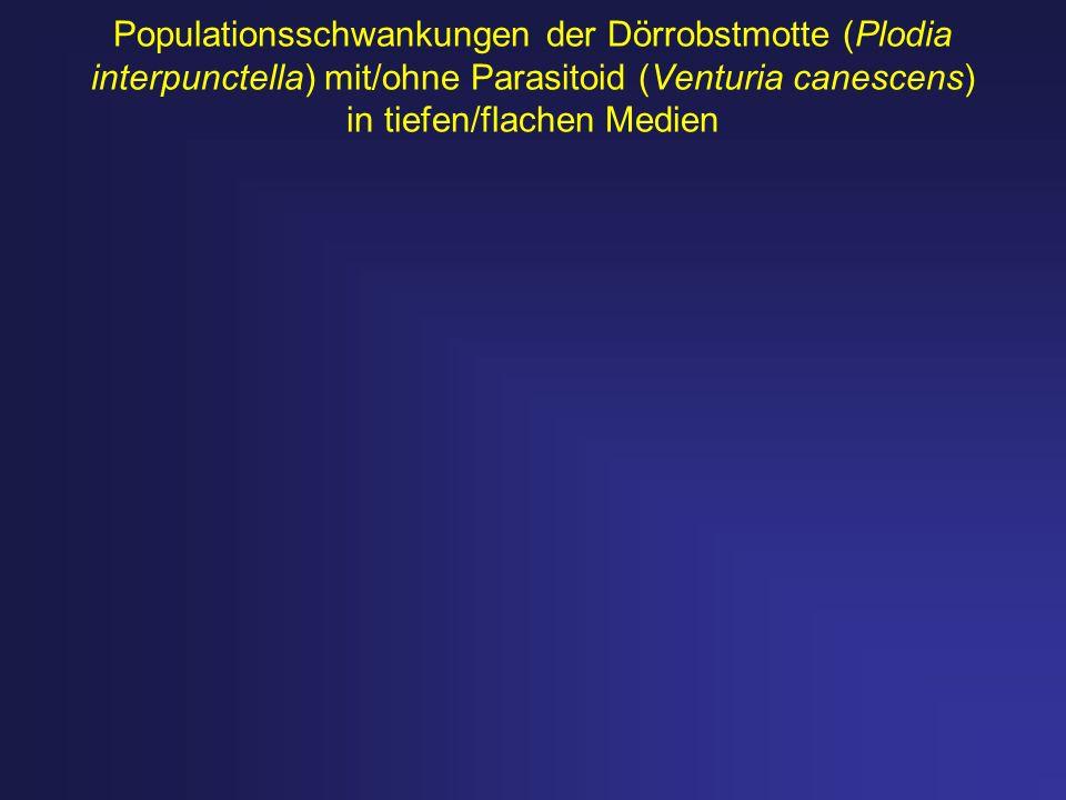 Populationsschwankungen der Dörrobstmotte (Plodia interpunctella) mit/ohne Parasitoid (Venturia canescens) in tiefen/flachen Medien