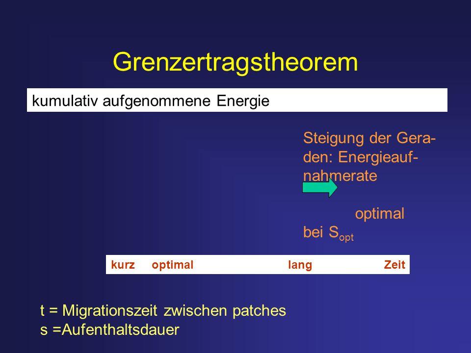 Grenzertragstheorem t = Migrationszeit zwischen patches s =Aufenthaltsdauer kumulativ aufgenommene Energie Steigung der Gera- den: Energieauf- nahmera