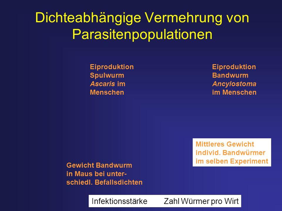 Dichteabhängige Vermehrung von Parasitenpopulationen Eiproduktion Spulwurm Ascaris im Menschen Eiproduktion Bandwurm Ancylostoma im Menschen Gewicht B