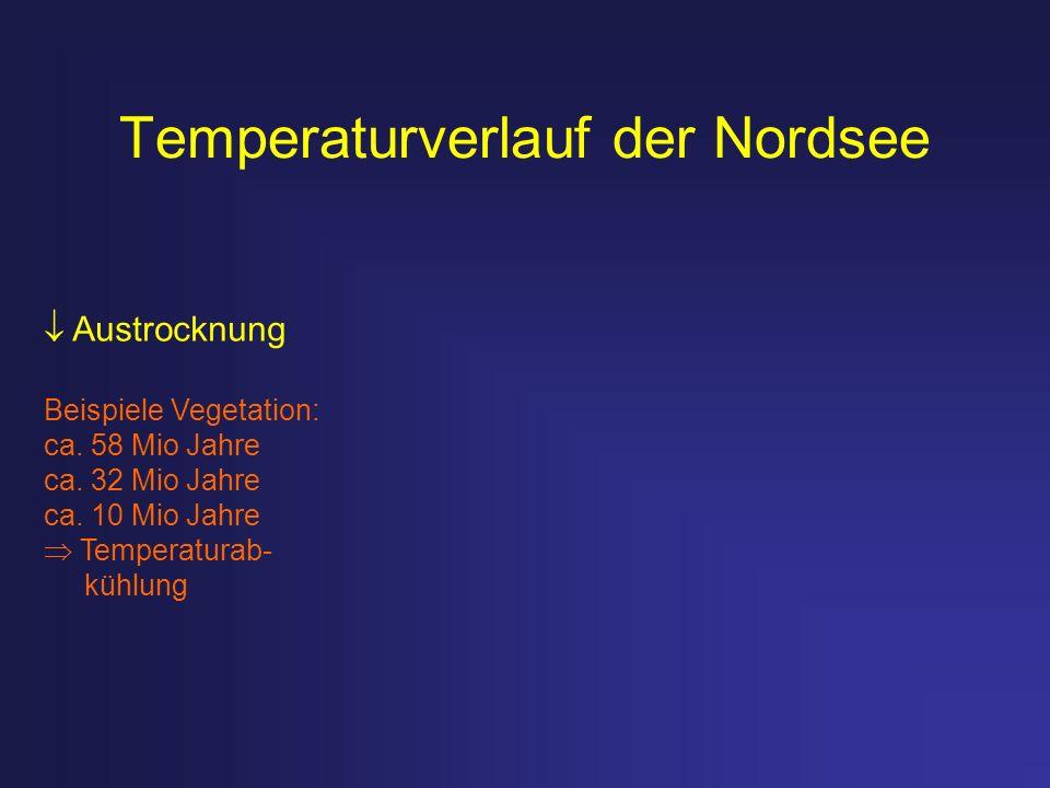 Temperaturverlauf der Nordsee Austrocknung Beispiele Vegetation: ca. 58 Mio Jahre ca. 32 Mio Jahre ca. 10 Mio Jahre Temperaturab- kühlung