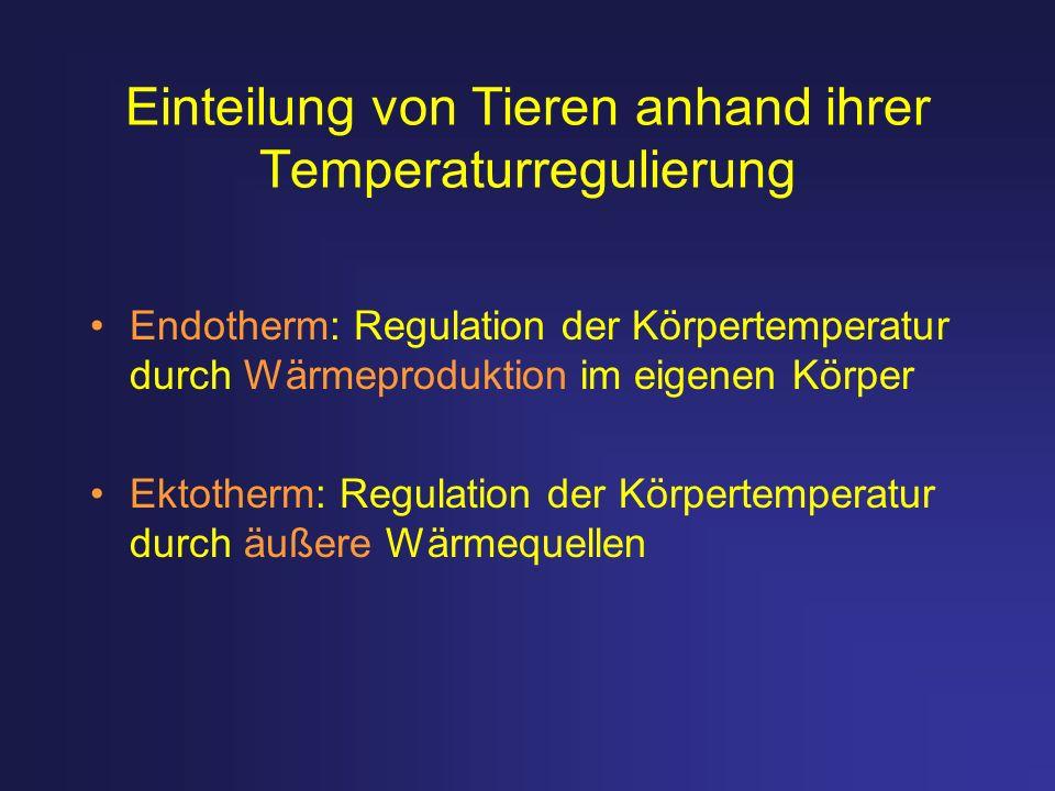 Einteilung von Tieren anhand ihrer Temperaturregulierung Endotherm: Regulation der Körpertemperatur durch Wärmeproduktion im eigenen Körper Ektotherm:
