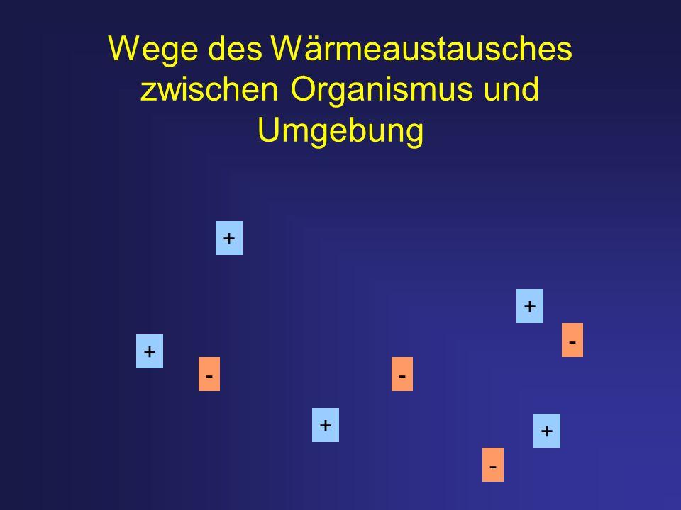 Wege des Wärmeaustausches zwischen Organismus und Umgebung + + + + + - - - -