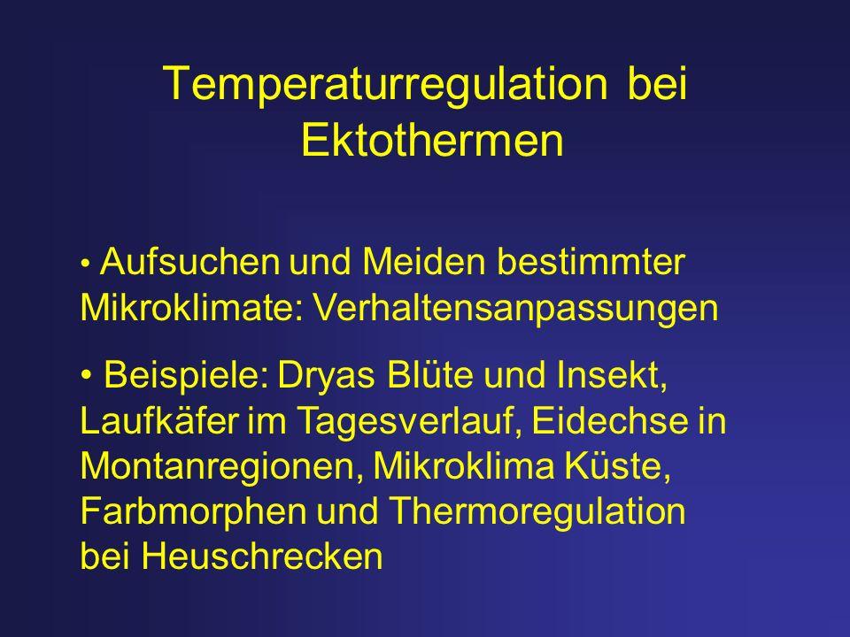 Temperaturregulation bei Ektothermen Aufsuchen und Meiden bestimmter Mikroklimate: Verhaltensanpassungen Beispiele: Dryas Blüte und Insekt, Laufkäfer