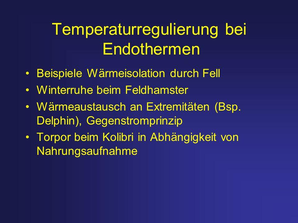Temperaturregulierung bei Endothermen Beispiele Wärmeisolation durch Fell Winterruhe beim Feldhamster Wärmeaustausch an Extremitäten (Bsp. Delphin), G
