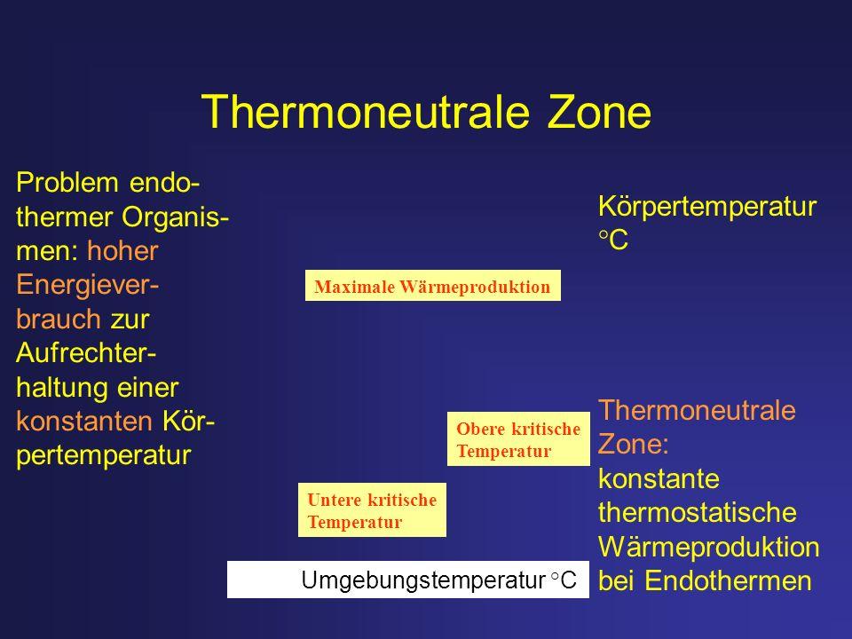 Thermoneutrale Zone Körpertemperatur °C Thermoneutrale Zone: konstante thermostatische Wärmeproduktion bei Endothermen Maximale Wärmeproduktion Untere