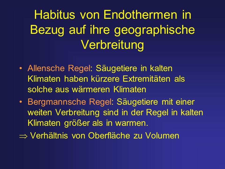 Habitus von Endothermen in Bezug auf ihre geographische Verbreitung Allensche Regel: Säugetiere in kalten Klimaten haben kürzere Extremitäten als solc