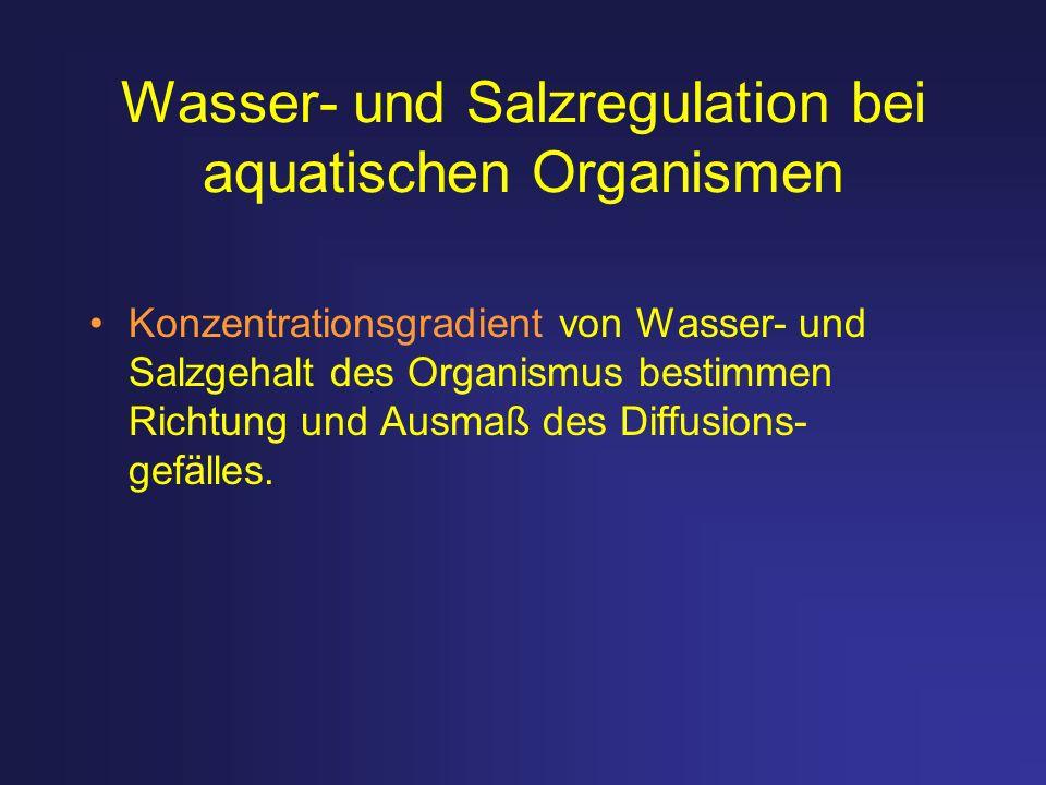 Wasser- und Salzregulation bei aquatischen Organismen Konzentrationsgradient von Wasser- und Salzgehalt des Organismus bestimmen Richtung und Ausmaß d