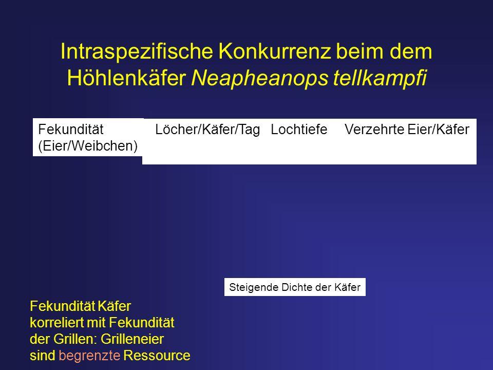 Intraspezifische Konkurrenz beim dem Höhlenkäfer Neapheanops tellkampfi Steigende Dichte der Käfer Löcher/Käfer/Tag Lochtiefe Verzehrte Eier/Käfer Fek