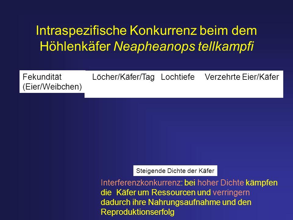 Intraspezifische Konkurrenz beim dem Höhlenkäfer Neapheanops tellkampfi Interferenzkonkurrenz: bei hoher Dichte kämpfen die Käfer um Ressourcen und ve
