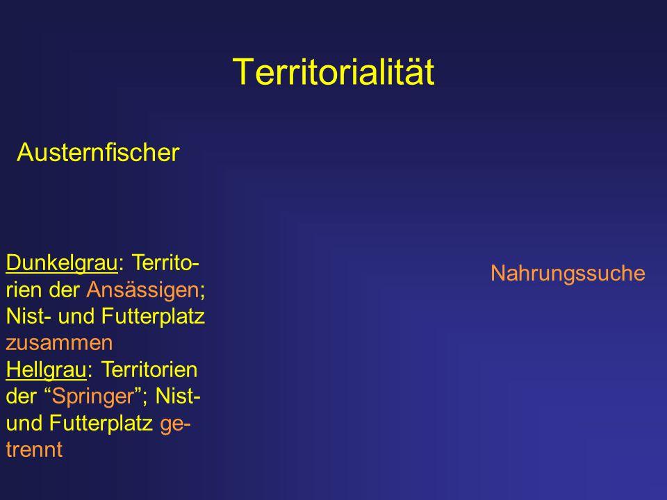 Territorialität Austernfischer Dunkelgrau: Territo- rien der Ansässigen; Nist- und Futterplatz zusammen Hellgrau: Territorien der Springer; Nist- und