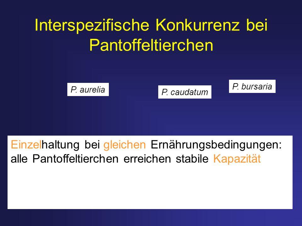 Interspezifische Konkurrenz bei Pantoffeltierchen Einzelhaltung bei gleichen Ernährungsbedingungen: alle Pantoffeltierchen erreichen stabile Kapazität