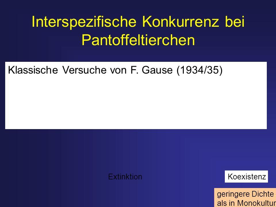 Interspezifische Konkurrenz bei Pantoffeltierchen Stabile Kapazität geringere Dichte als in Monokultur Klassische Versuche von F. Gause (1934/35) Exti