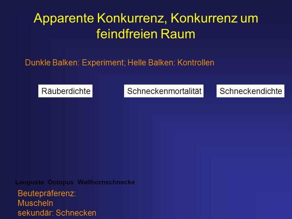 Dunkle Balken: Experiment; Helle Balken: Kontrollen Languste Octopus Wellhornschnecke Beutepräferenz: Muscheln sekundär: Schnecken Apparente Konkurren