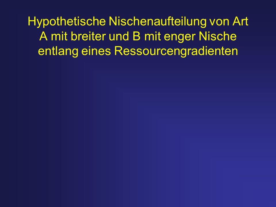 Hypothetische Nischenaufteilung von Art A mit breiter und B mit enger Nische entlang eines Ressourcengradienten