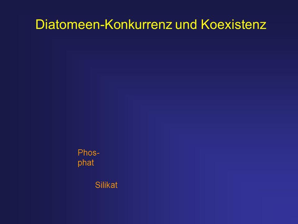 Diatomeen-Konkurrenz und Koexistenz Silikat Phos- phat