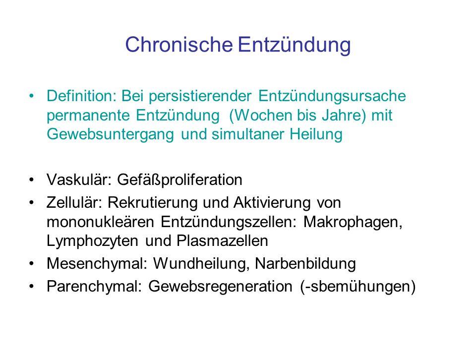 Chronische Entzündung Definition: Bei persistierender Entzündungsursache permanente Entzündung (Wochen bis Jahre) mit Gewebsuntergang und simultaner H