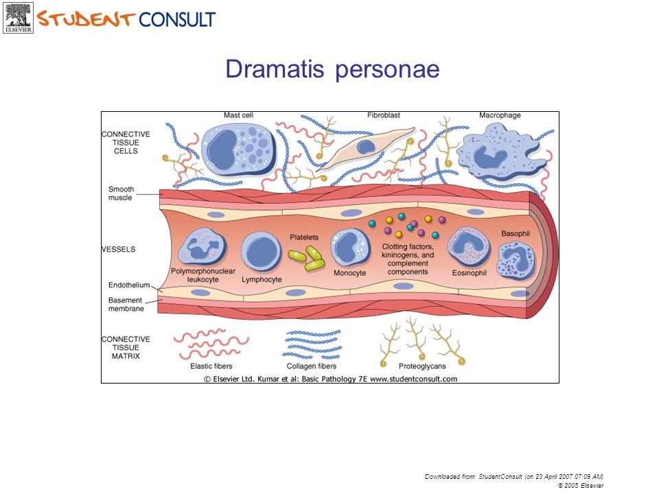 Downloaded from: StudentConsult (on 23 April 2007 07:09 AM) © 2005 Elsevier Dramatis personae