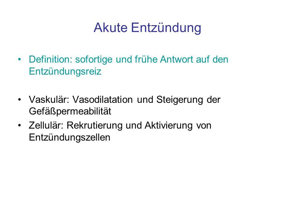 Akute Entzündung Definition: sofortige und frühe Antwort auf den Entzündungsreiz Vaskulär: Vasodilatation und Steigerung der Gefäßpermeabilität Zellul