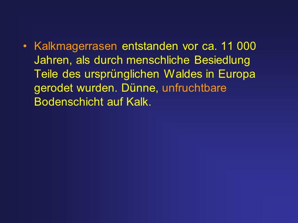 Kalkmagerrasen entstanden vor ca. 11 000 Jahren, als durch menschliche Besiedlung Teile des ursprünglichen Waldes in Europa gerodet wurden. Dünne, unf