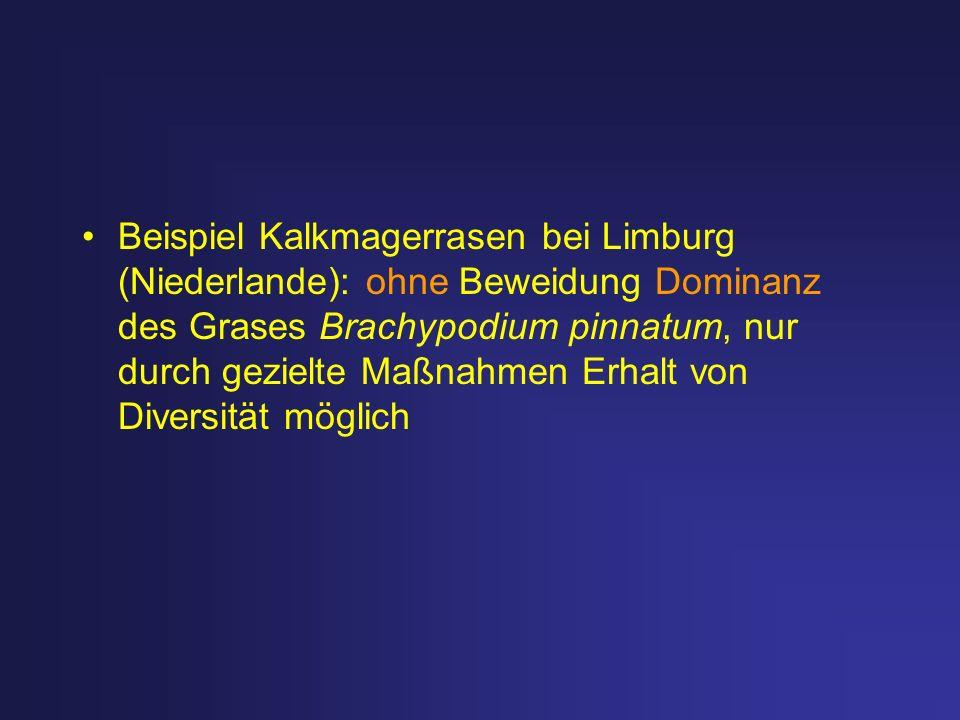 Beispiel Kalkmagerrasen bei Limburg (Niederlande): ohne Beweidung Dominanz des Grases Brachypodium pinnatum, nur durch gezielte Maßnahmen Erhalt von D