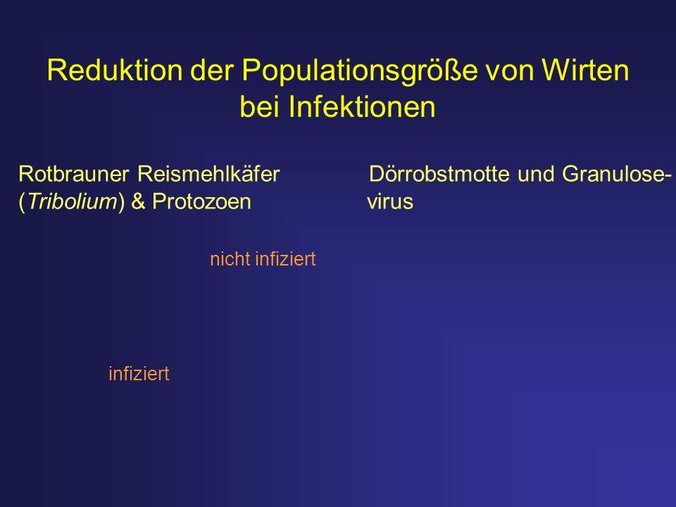 Reduktion der Populationsgröße von Wirten bei Infektionen infiziert nicht infiziert Rotbrauner Reismehlkäfer Dörrobstmotte und Granulose- (Tribolium)