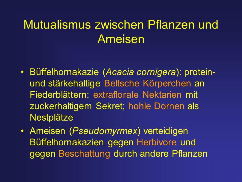 Mutualismus zwischen Pflanzen und Ameisen Büffelhornakazie (Acacia cornigera): protein- und stärkehaltige Beltsche Körperchen an Fiederblättern; extra