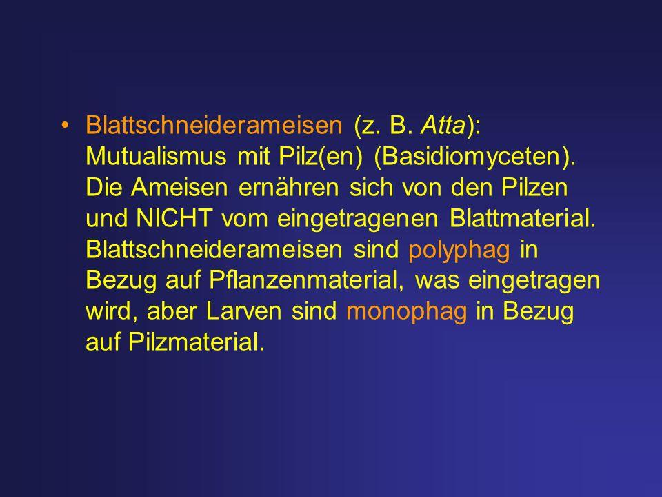 Blattschneiderameisen (z. B. Atta): Mutualismus mit Pilz(en) (Basidiomyceten). Die Ameisen ernähren sich von den Pilzen und NICHT vom eingetragenen Bl