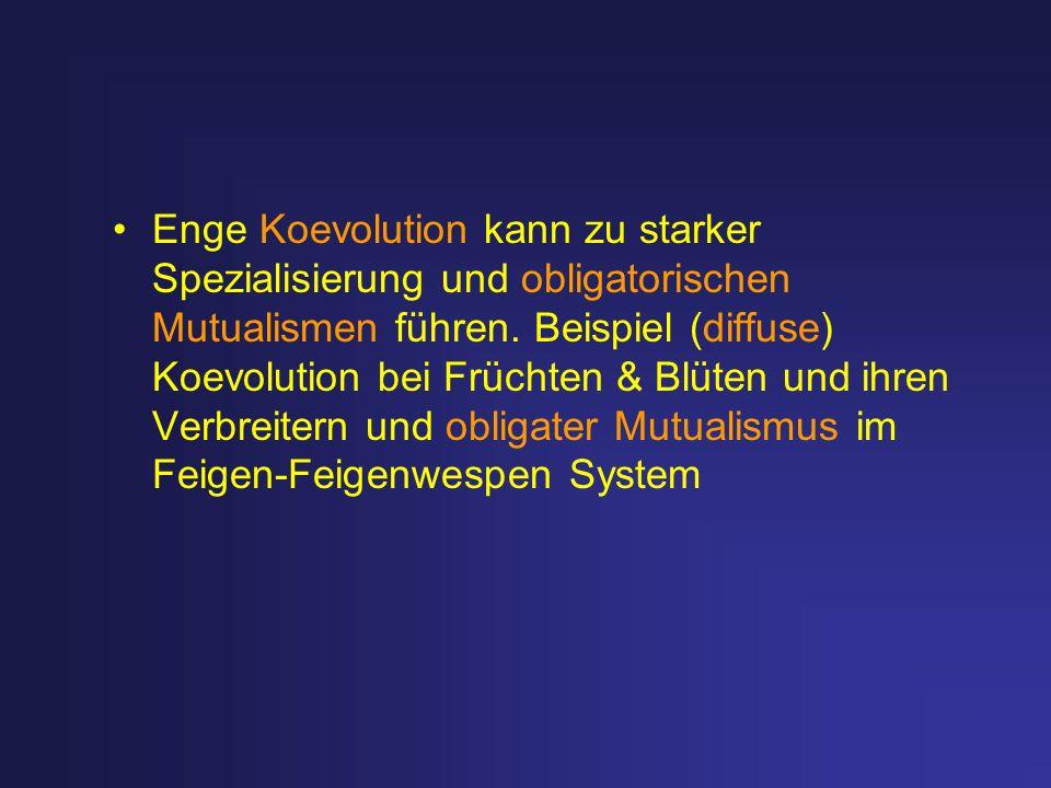 Enge Koevolution kann zu starker Spezialisierung und obligatorischen Mutualismen führen. Beispiel (diffuse) Koevolution bei Früchten & Blüten und ihre