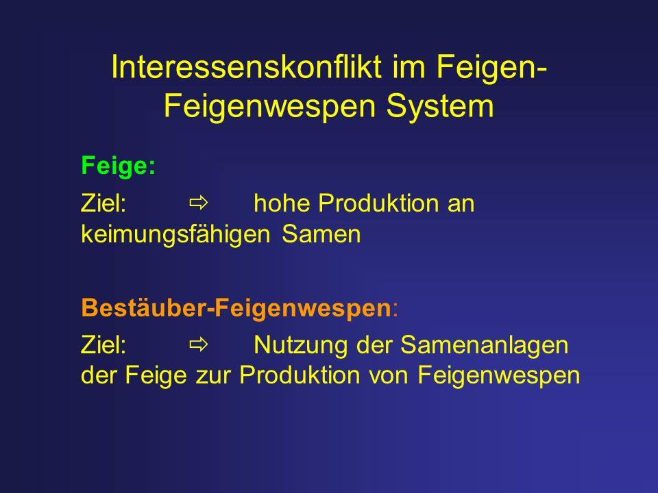 Interessenskonflikt im Feigen- Feigenwespen System Feige: Ziel: hohe Produktion an keimungsfähigen Samen Bestäuber-Feigenwespen: Ziel: Nutzung der Sam