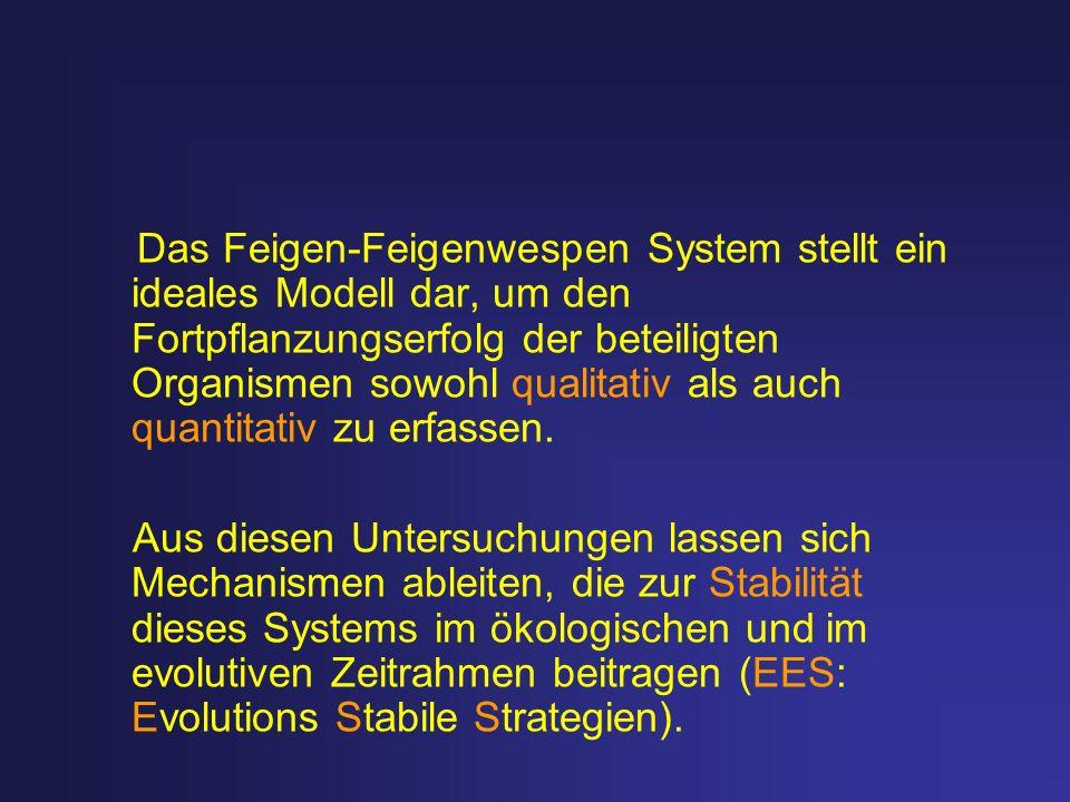 Das Feigen-Feigenwespen System stellt ein ideales Modell dar, um den Fortpflanzungserfolg der beteiligten Organismen sowohl qualitativ als auch quanti