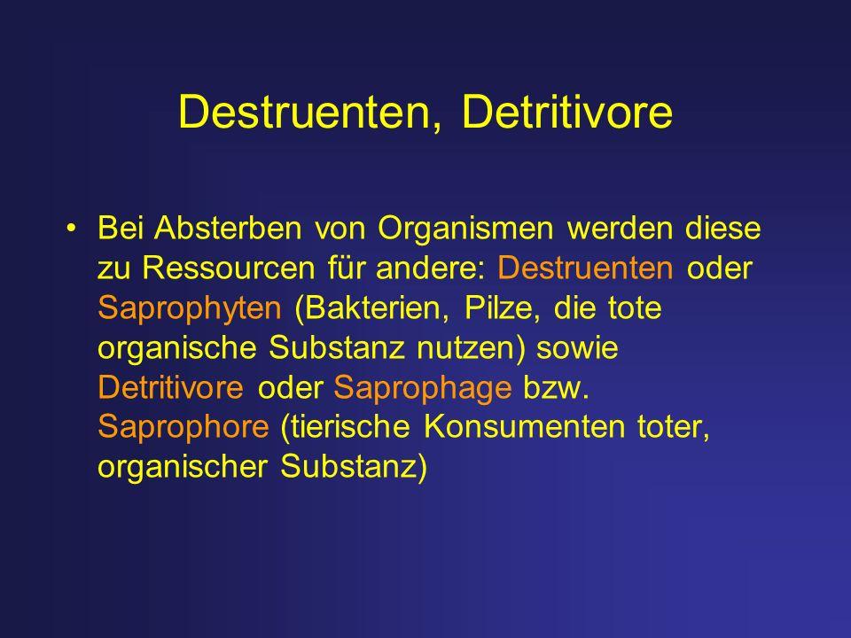 Destruenten, Detritivore Bei Absterben von Organismen werden diese zu Ressourcen für andere: Destruenten oder Saprophyten (Bakterien, Pilze, die tote