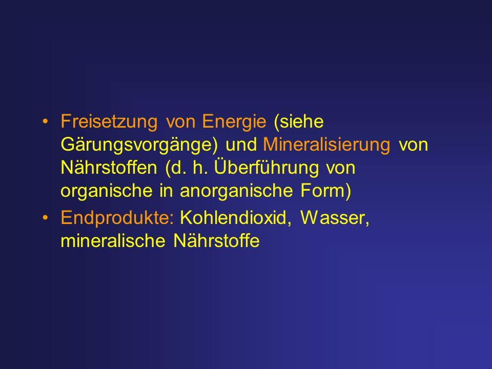 Freisetzung von Energie (siehe Gärungsvorgänge) und Mineralisierung von Nährstoffen (d. h. Überführung von organische in anorganische Form) Endprodukt