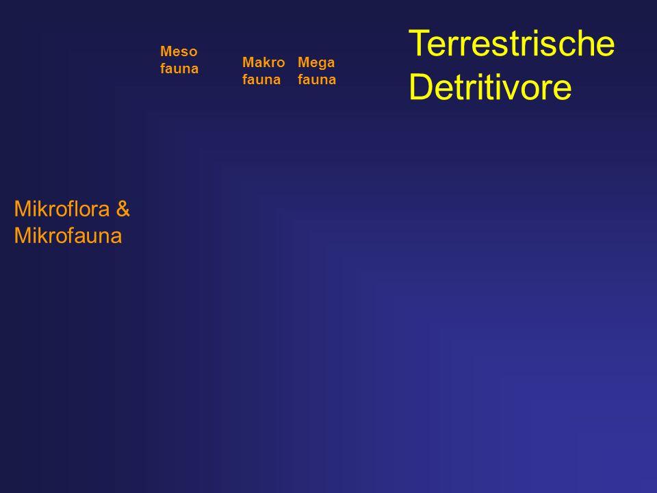 Mikroflora & Mikrofauna Meso fauna Makro Mega fauna Terrestrische Detritivore