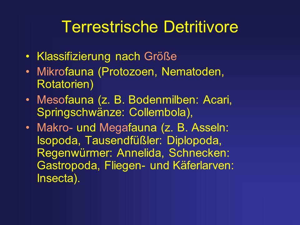 Terrestrische Detritivore Klassifizierung nach Größe Mikrofauna (Protozoen, Nematoden, Rotatorien) Mesofauna (z. B. Bodenmilben: Acari, Springschwänze